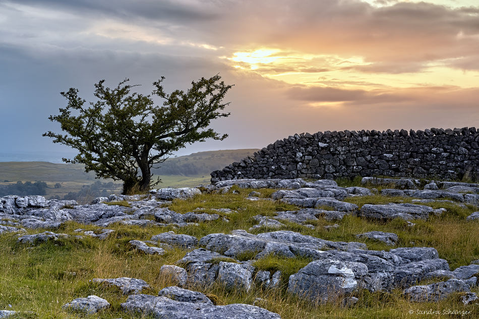 Yorkshire Dales Lone Tree
